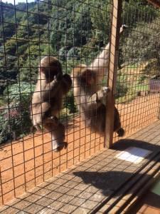 monkey-park