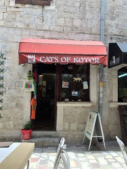 cats of kotor (2)