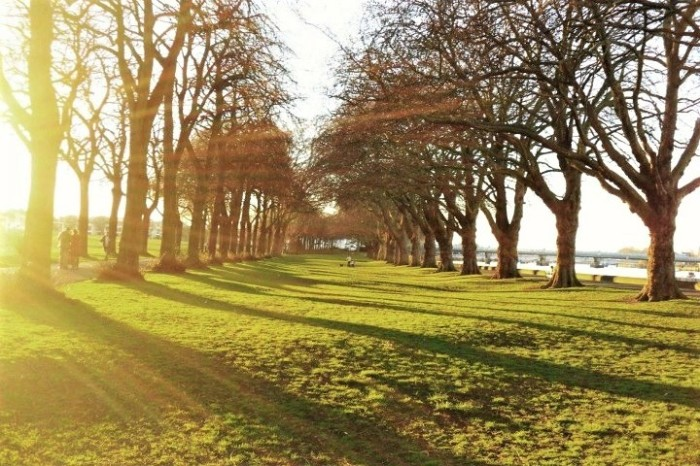 Find a park for a picnic! My local park and favorite place to lounge in the sun was Wandsworth Park.