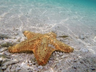Starfish and...