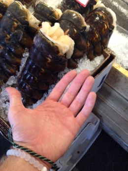 Hand for scale for the size of this lobster tail