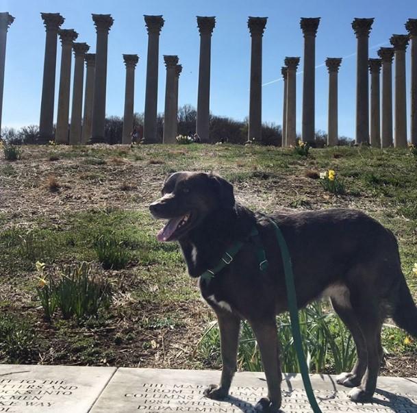 National Arboretum DogsDC