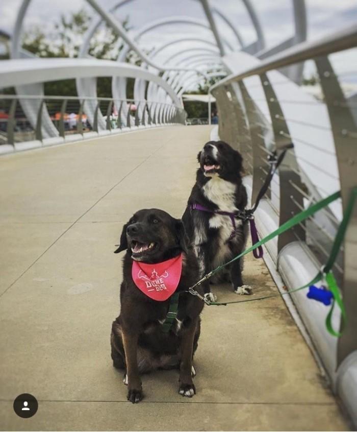 YardsPark DogsDC