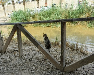 dead seat cat at jordan river