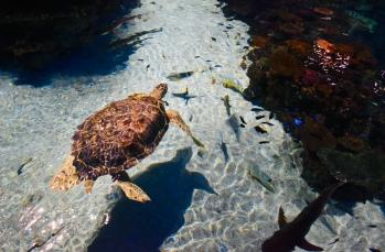 In the Reef Exhibit