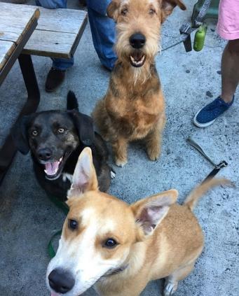 Patio Pups from Kat