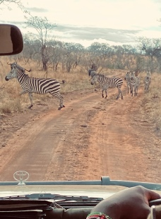 Zebra crossing. When they feel like it.