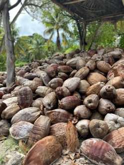Coconuts for Days