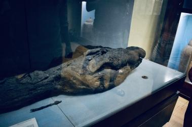 Mummified Croc